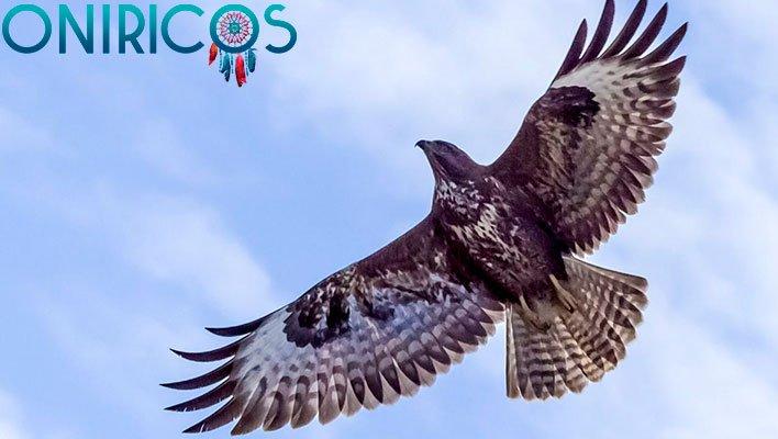 soñar con aves de presa - oniromancia