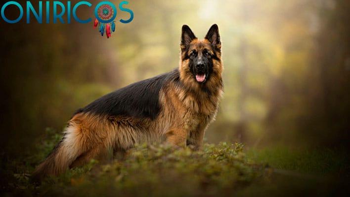 soñar con un perro pastor - oniromancia