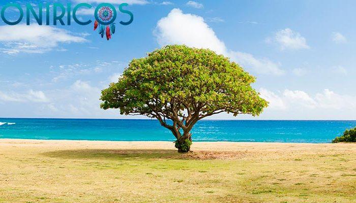 significado de Soñar con árboles